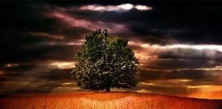 Что такое дерево познания добра и зла?